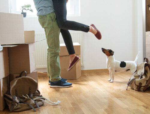 Moving Home with Pets. All You Need to Know